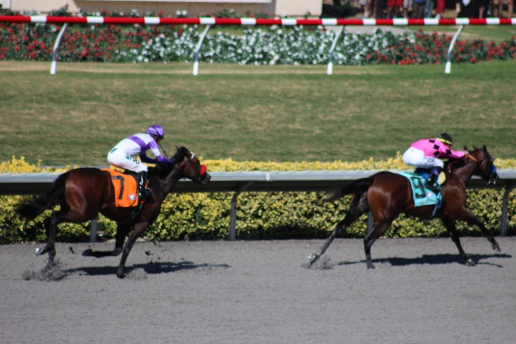 Races-(4)
